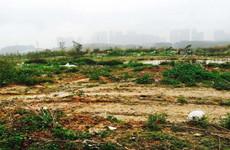 (已成交)青秀区长虹路临街66600平(约100亩)的林地招租