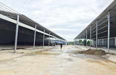 (已成交)邕武路林科院京鸿基建材市场旁300-10000平厂房