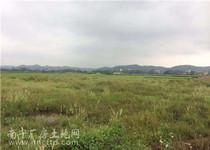 良庆区大塘镇700亩农业、林业、工业用地整体招租或转让