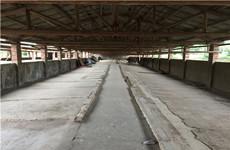 江南区友谊路良凤江附近那渌1500平米厂房仓库、养殖场招租