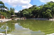 江南区友谊路方向良凤江4亩两张鱼塘、钓场招租